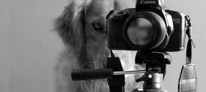 Em preto e branco, um cão atrás de uma máquina fotográfica Canon, parecendo que ele está regulando a mesma para tirar uma foto ou fazer uma filmagem